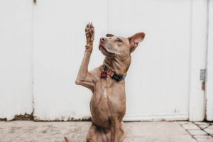 Brown dog raised paw - Contact Us - Inderly IT